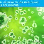 Historia del Oxígeno en los Seres Vivos. La Paradoja del Oxígeno