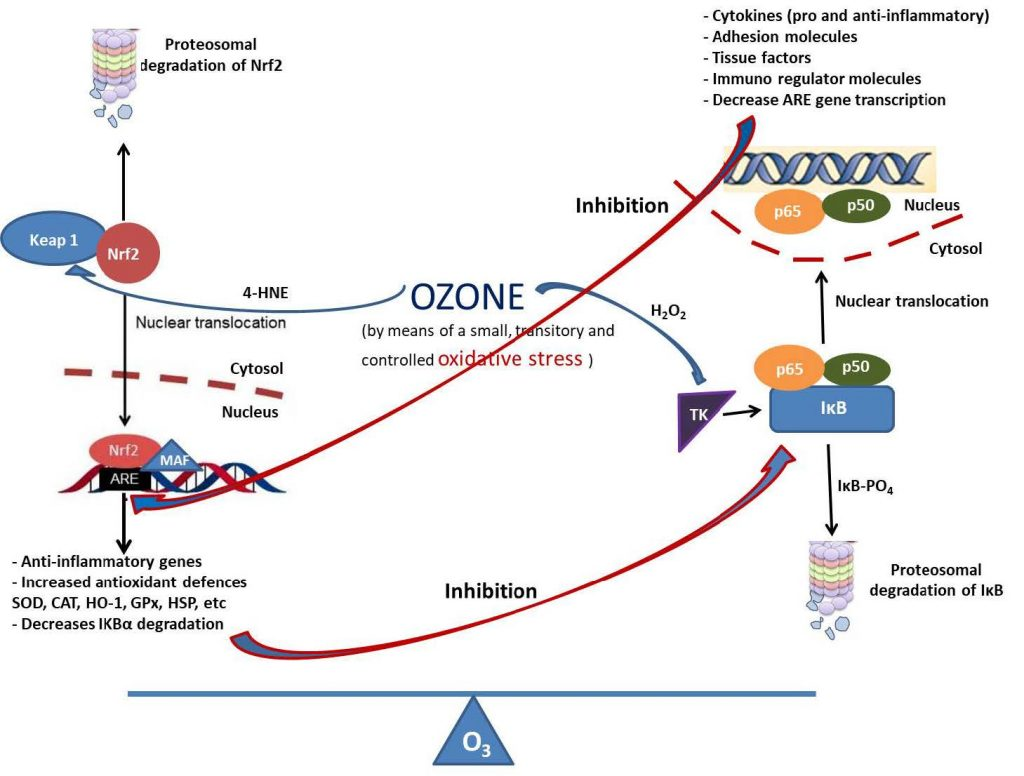 Therapeutic Effects of Ozone Therapy that Justifies its Use for the Treatment of COVID-19
